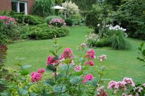 Garten im Phloxrausch