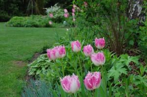 Tulpen überall!