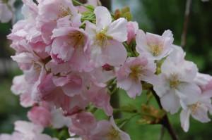 Der Garten im Blütenrausch